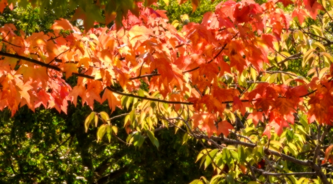 Autumn Day-Glow