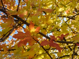 20171022-Fall_Colors-02