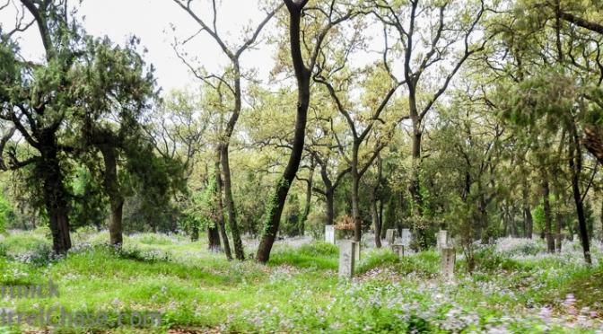 Forest/Graveyards