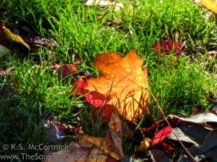 Vibrant fallen leaf.
