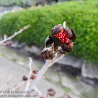20180115-Bud_or_Fruit-01