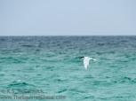 Sea bird.