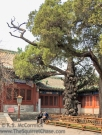 Folks resting under a gnarly tree at the Confucius Temple in Beijing.