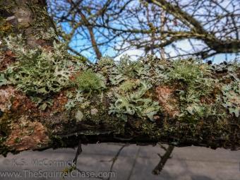 KSM-20180115-Tree_Textures-01