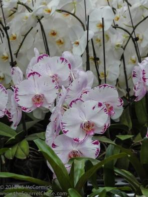 20180423-Veggie_Fair-Orchids-01