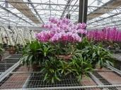 20180423-Veggie_Fair-Orchids-03