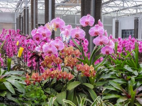 20180423-Veggie_Fair-Orchids-05