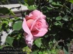KSM-20180513-MD_Flowers-16