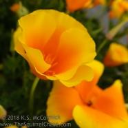 KSM-20180518-Spring_Gold-03