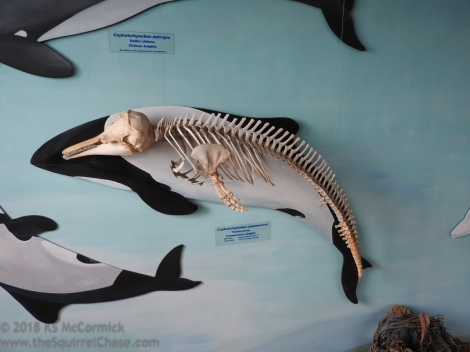 Mural with porpoise skeleton.