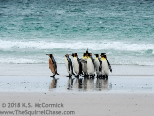 KSM-20170112-Penguins_in_seafoam-01