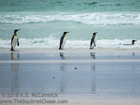 KSM-20170112-Penguins_in_seafoam-05