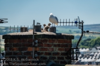 Chimney with gulls.