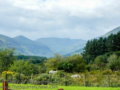 KSM-20130819-Fence-Ireland-04