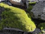 KSM-20180303-Lime&Light_Green-03
