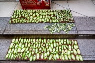 Rows of drying cucumber.