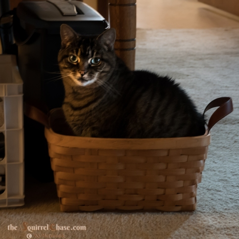 Large tabby cat in a basket.