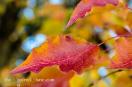 KSM-20181105-Fall_Foliage-04