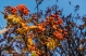 KSM-20181105-Fall_Foliage-05