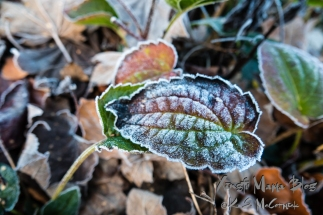 20181119-First_Frost-04