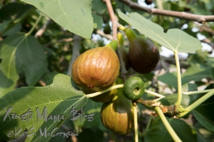 Our figs.