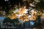 KSM-20181119-November-10
