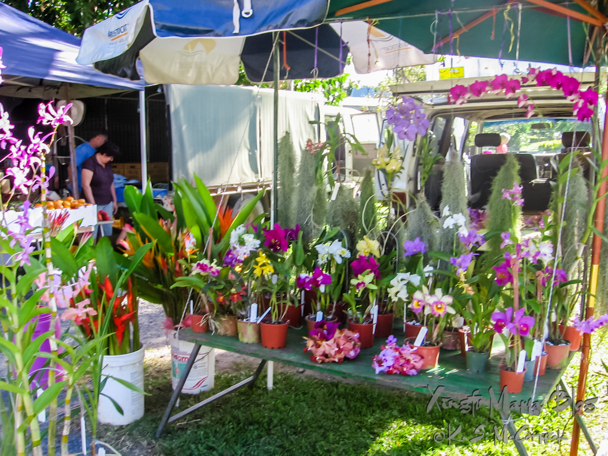 Orchids for sale at a farmer's market in Port Douglas, Australia.