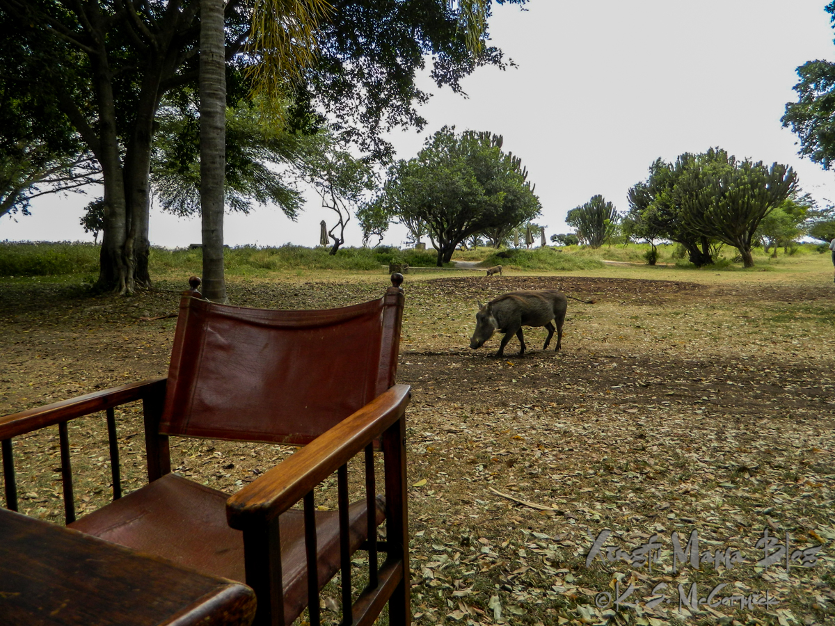 Lunch was served outdoors, with warthogs wandering about.