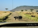 ksm20120213-masai_mara_roads-02