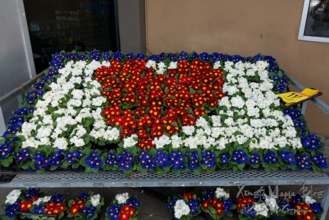 Primroses displayed for sale as a rectangle: blue ones as an outer border, white ones as fill and red ones forming a heart in the center.