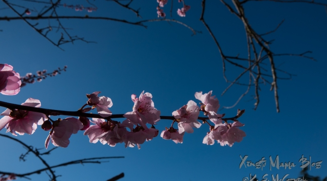 Spring Sunshine-Far and Near
