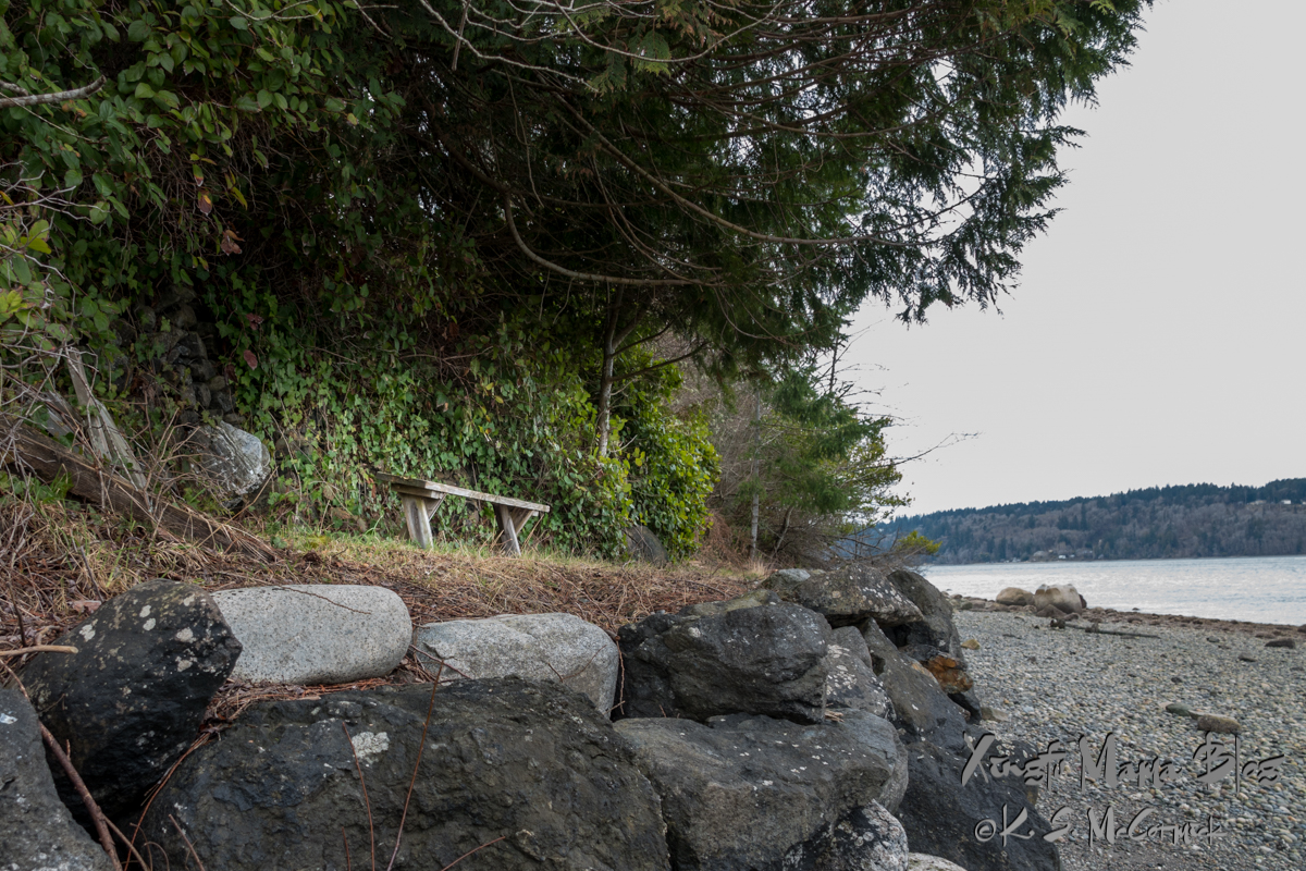 Simple wooden bench on a bulkhead on Puget Sound.