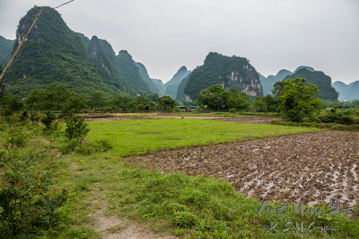 Verdant rice field surrounded by karst landscape in a village outside of Yangshuo. Guilin, China.