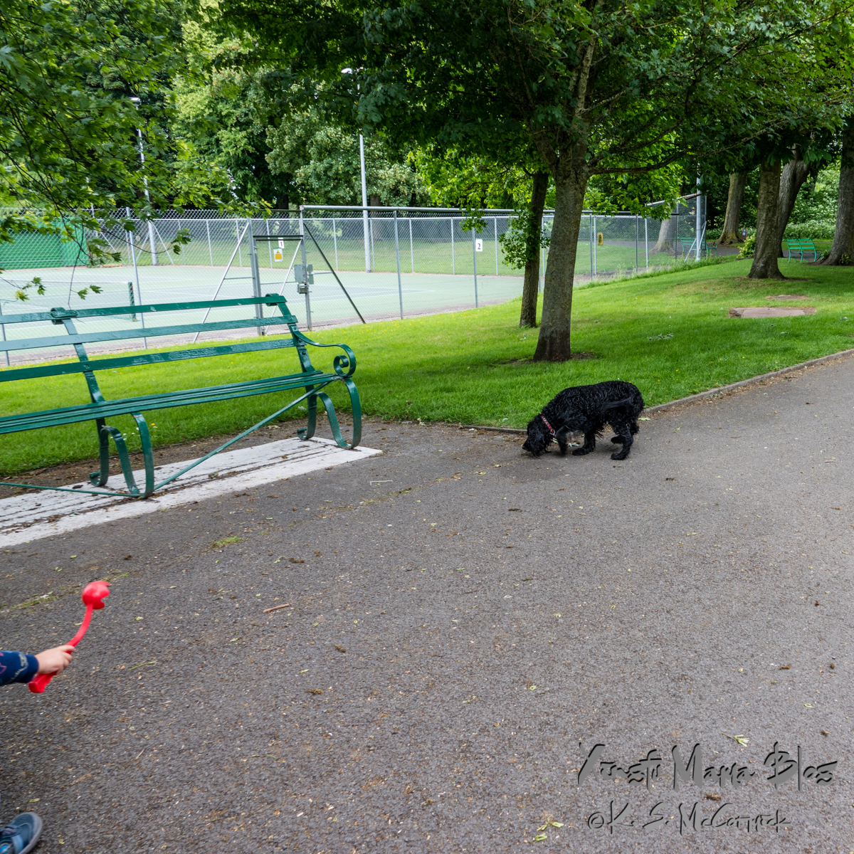 Green bench, wet black dog and the arm of a child with a ball thrower, taken at a park in Carlisle, Cumbria, England.