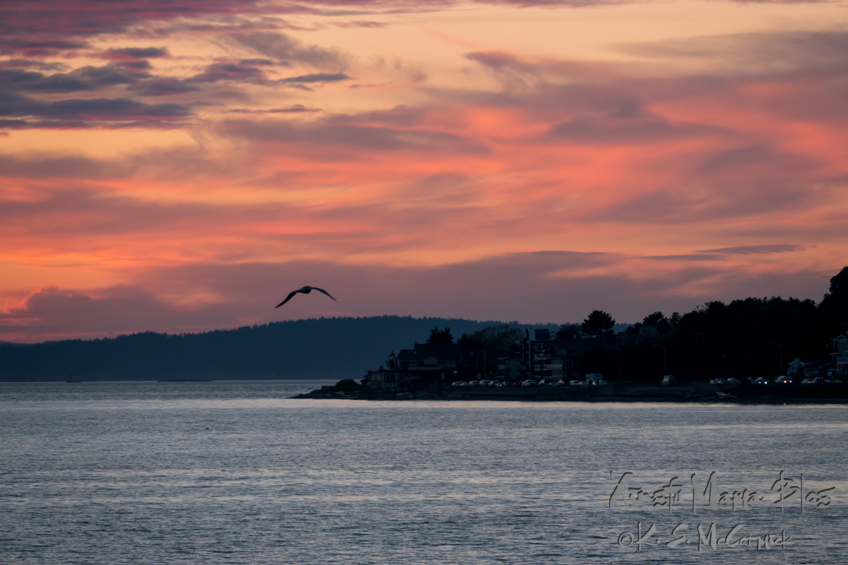 Seagull flying over Puget Sound at sunset.