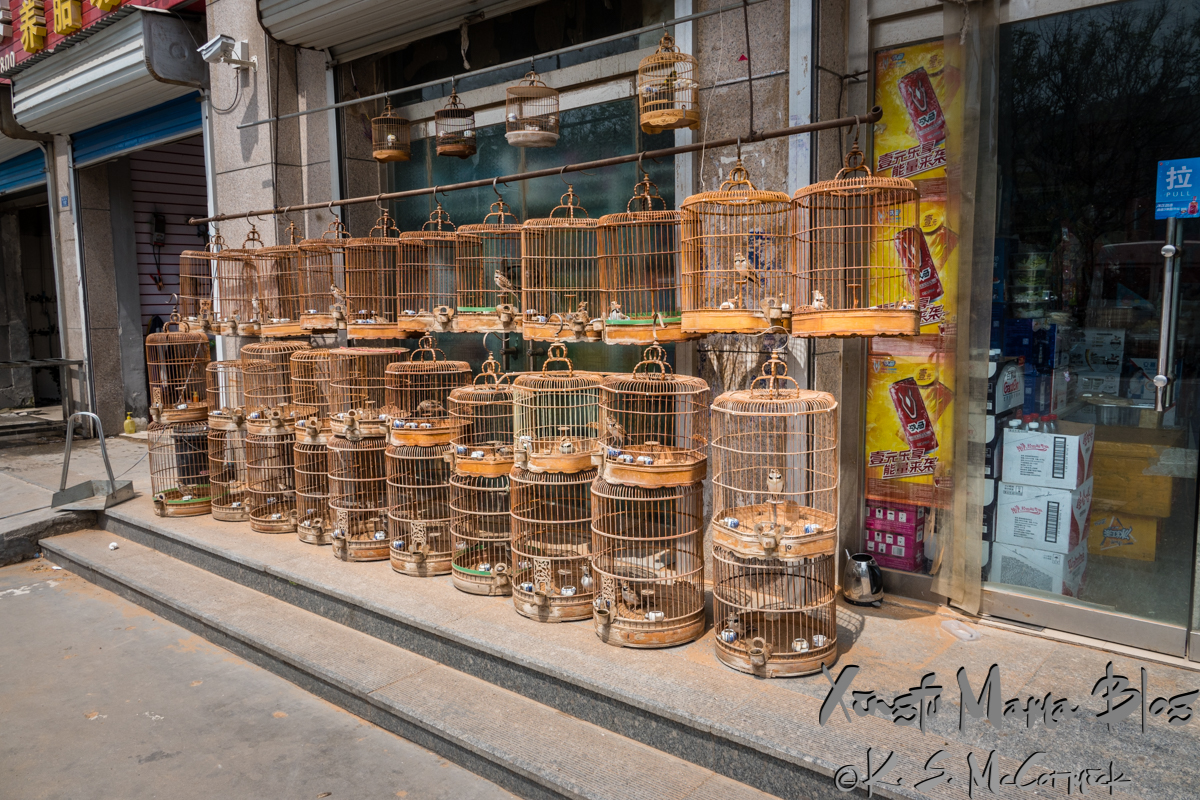Rows of round bird cages, with occupants, outside a convenience store in Shouguang, Weifang, Shandong Province, China.