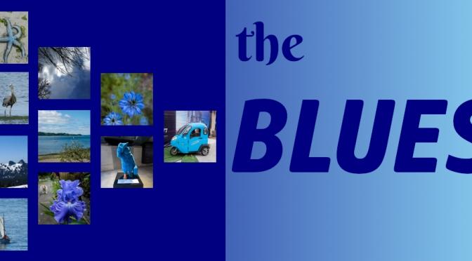 July Blue Squares-14