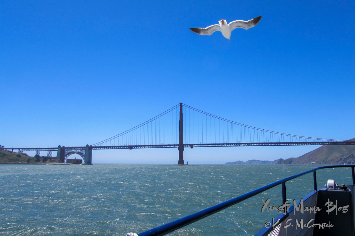 A seagull and the Golden Gate Bridge dominate the scene facing out toward the Pacific Ocean from San Francisco Bay.