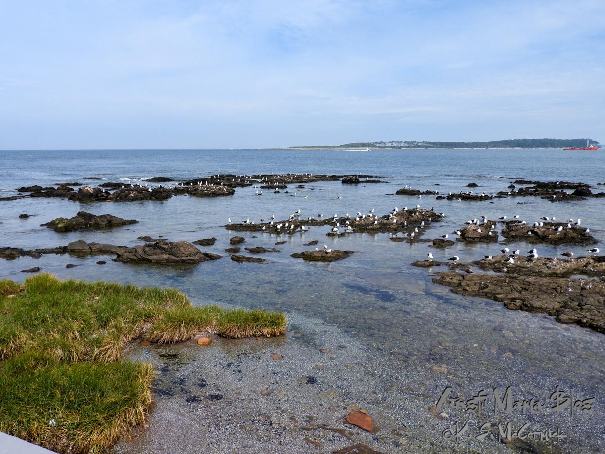 A variety of seabirds congregating on the rocks at the divide between the Rio de la Plata and the Atlantic Ocean, at Punta del Este, Uruguay.
