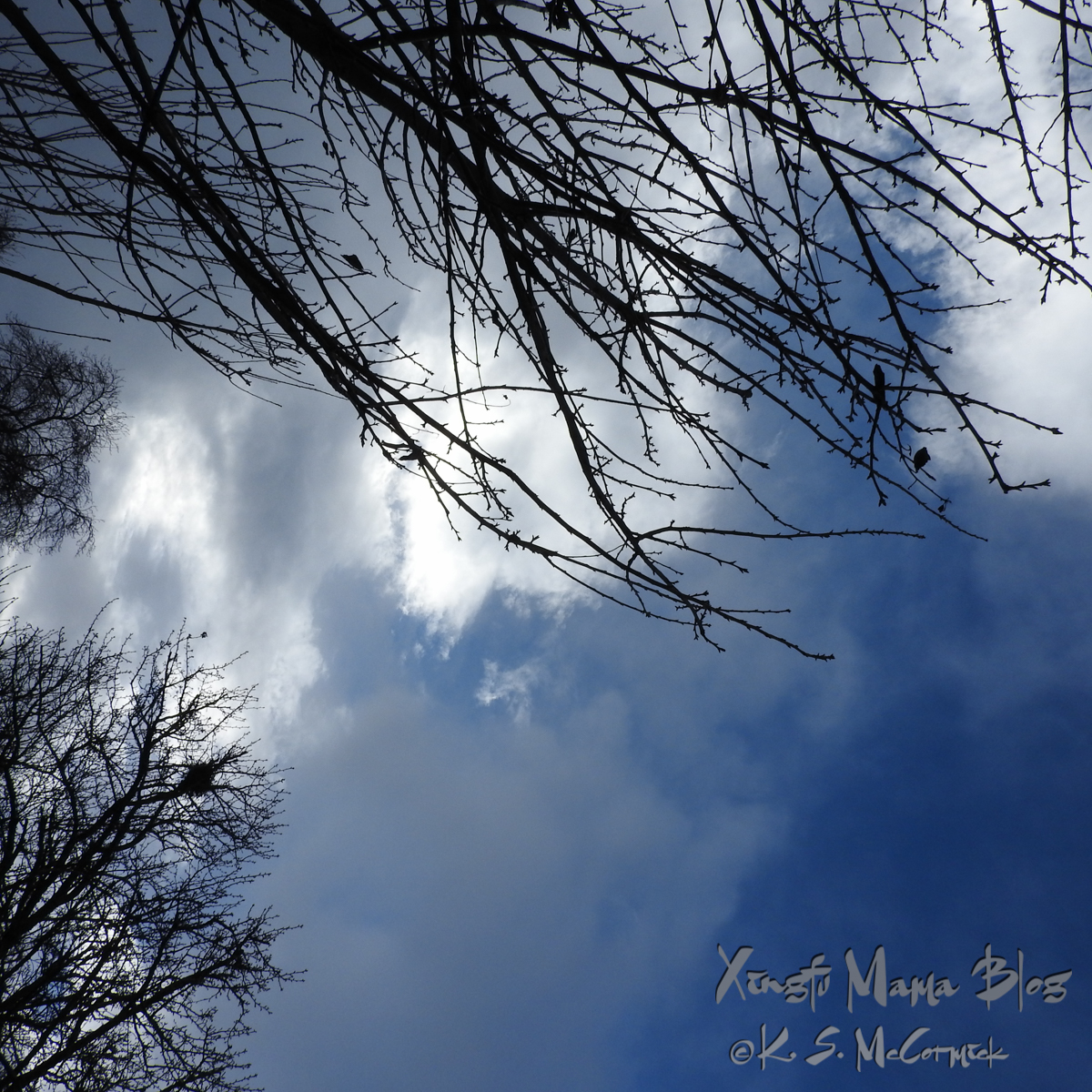 Looking up past bare trees toward a blue winter storm cloud.