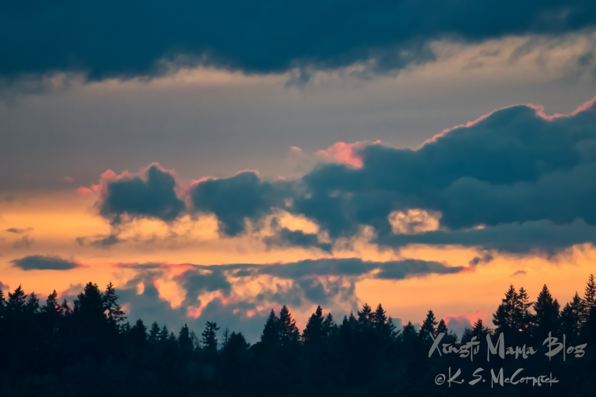 Trees silhouetted against a sunset sky with clouds edged with pink against a gold and grey sky at sunset over the Kitsap Peninsula, viewed from Vashon Island in Puget Sound.