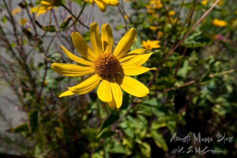 Close up of a cheerful yellow cone flower.