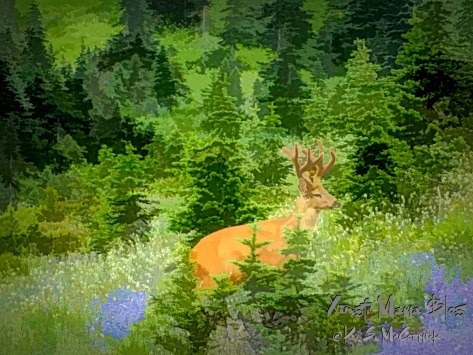 Stylized art made from a photo of a buck deer in lupine meadows at teh edge of an alpine forest.