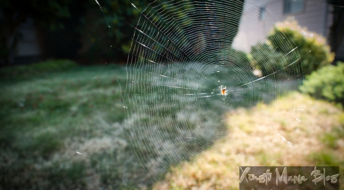 Busy season for spiders