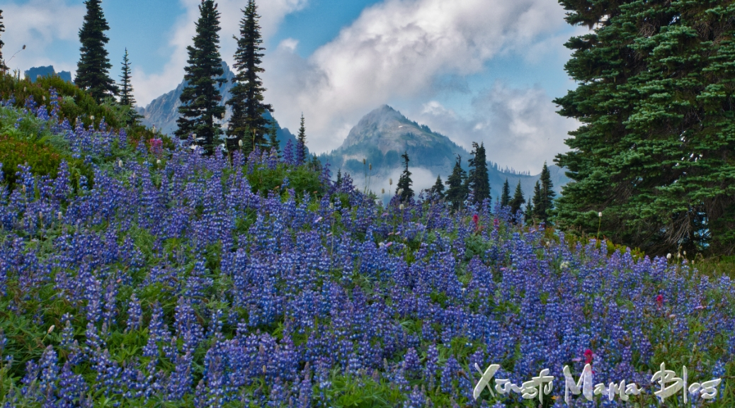 On the Upper Lakes Trail near Paradise on Mount Rainier: an alpine meadow with the Tatoosh mountain range behind.