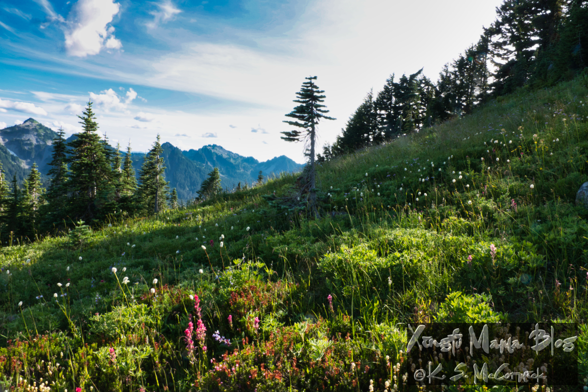 White wildflowers cause the alpine meadows at Mount Rainier to sparkle, even in the shade.