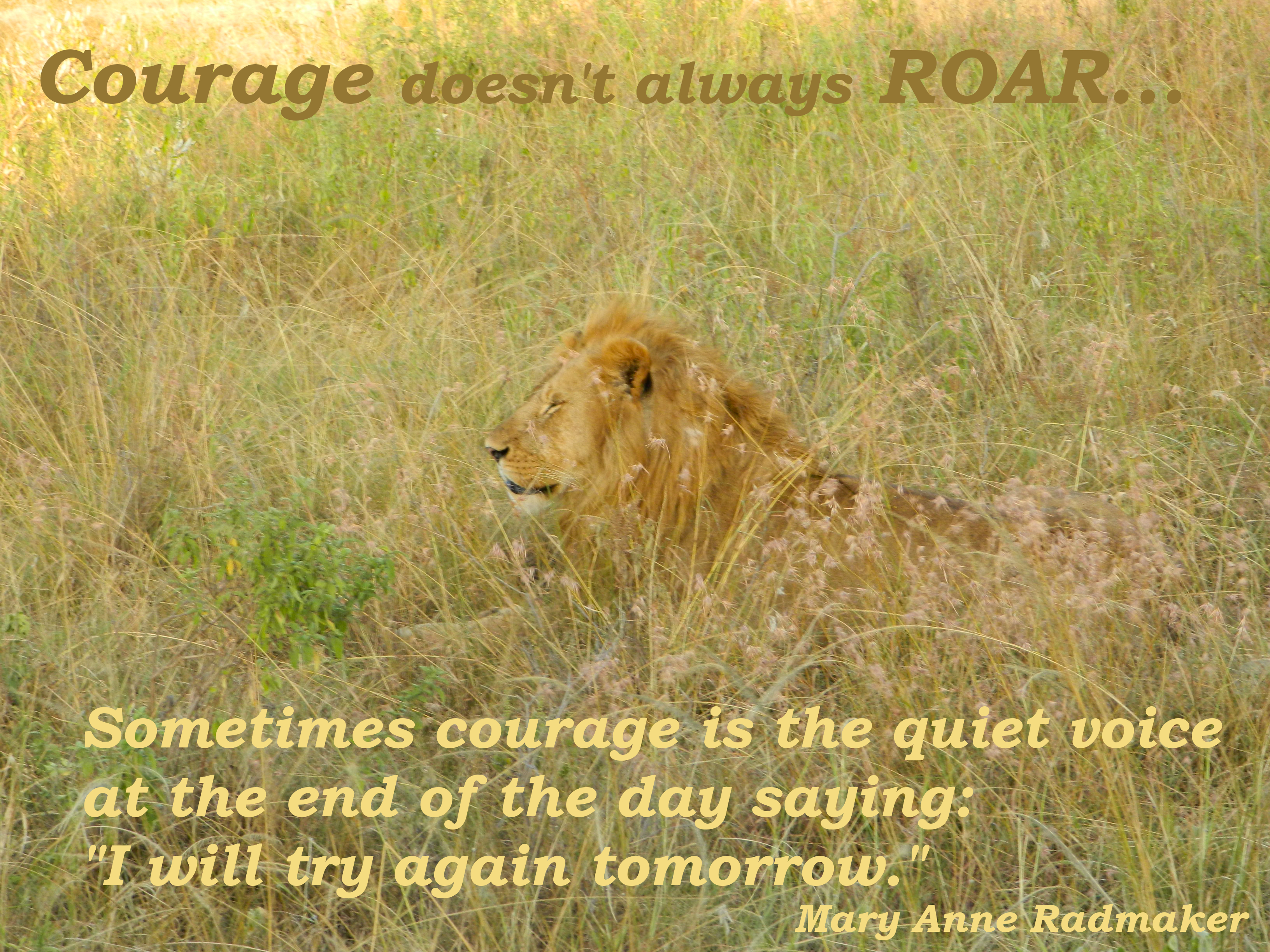 "Lion in the grass with eyes closed. Quote: courage doesn't always roar...sometimes courage is the quiet voice at the end of the day saying ""I will try again tomorrow."""