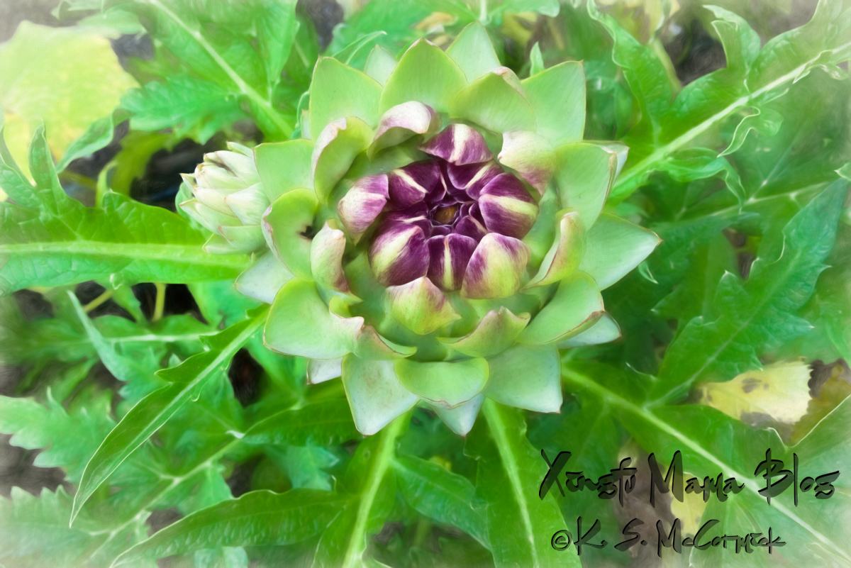 An artichoke flower and bud.