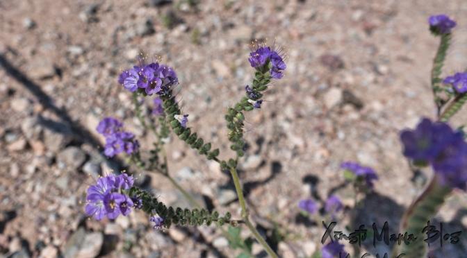 Teeny-tiny purple flowers