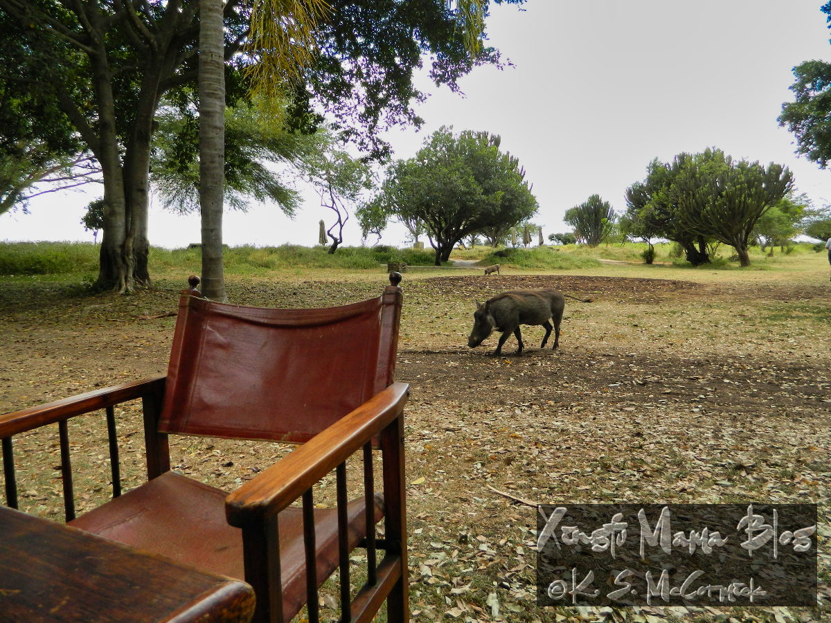 Outdoor eating area at Kichwa Tembo, very nice wooden and leather folding chair with a wart hog wandering nearby.